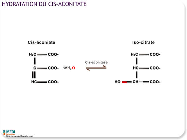 Hydratation du cis-aconitate
