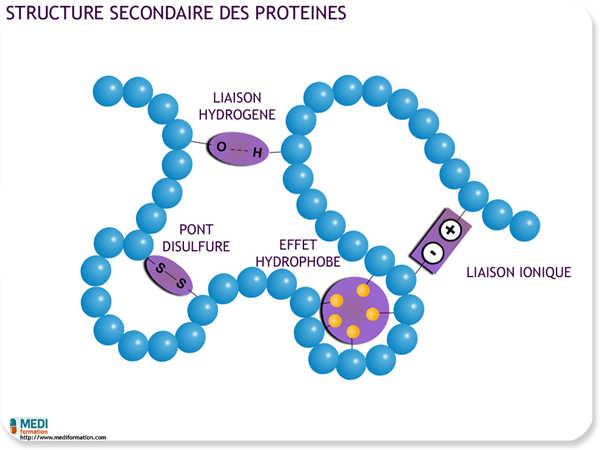 Structure secondaire des proteines
